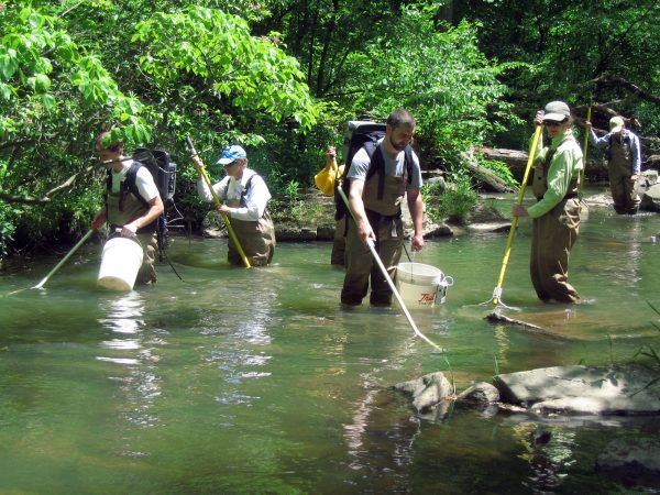 Electroshocking the river to determine fish counts