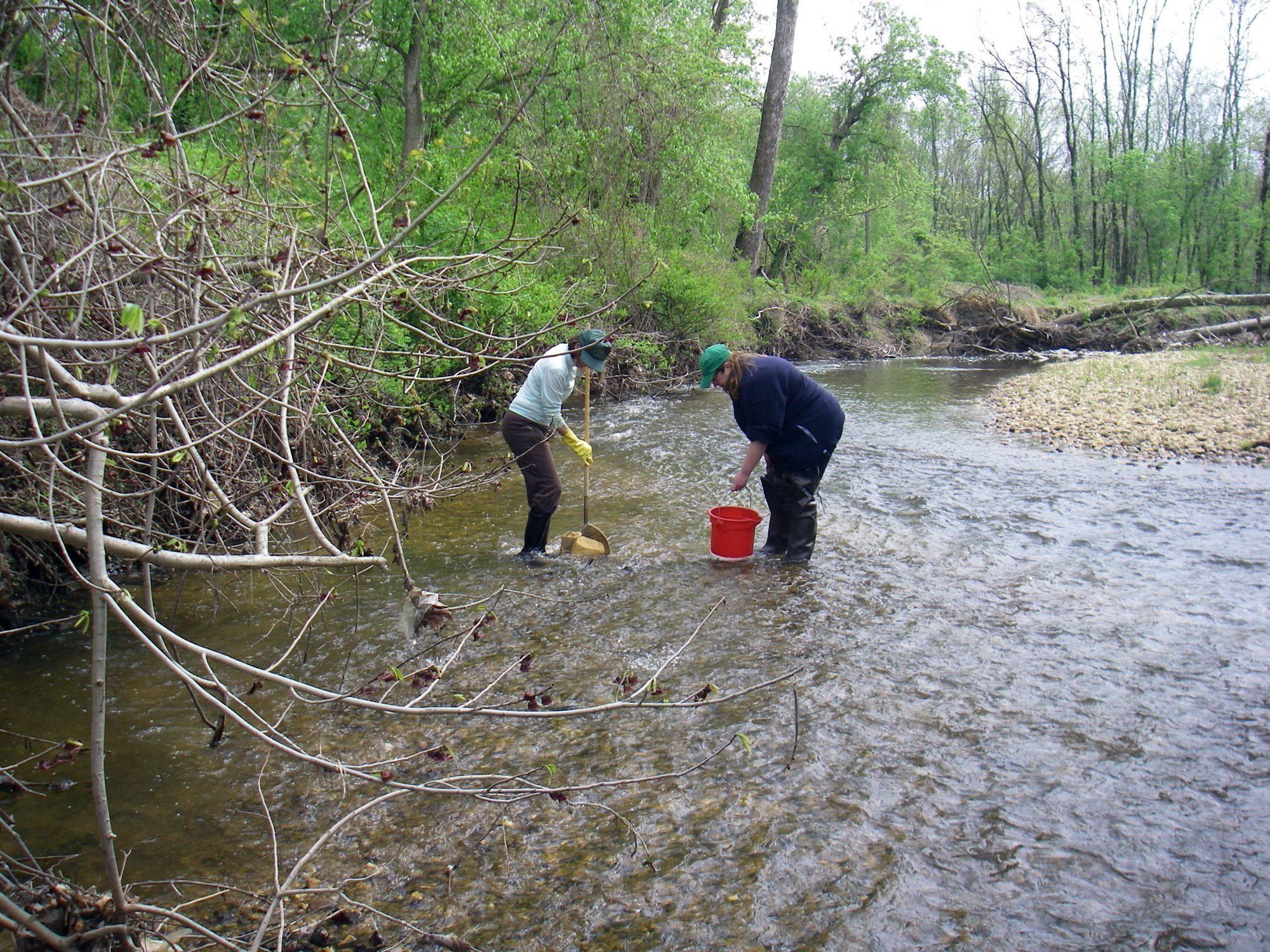 Seining rivers and streams to collect macroinvertabrates