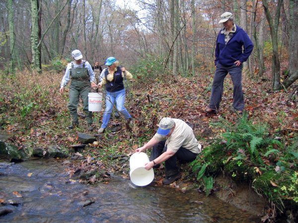 CWA Members helped DRN personnel stock this river with 1,000 brown trout
